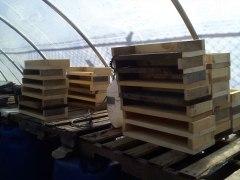 Seedling Flats